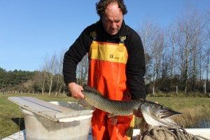 Flinke snoek in leidingwater